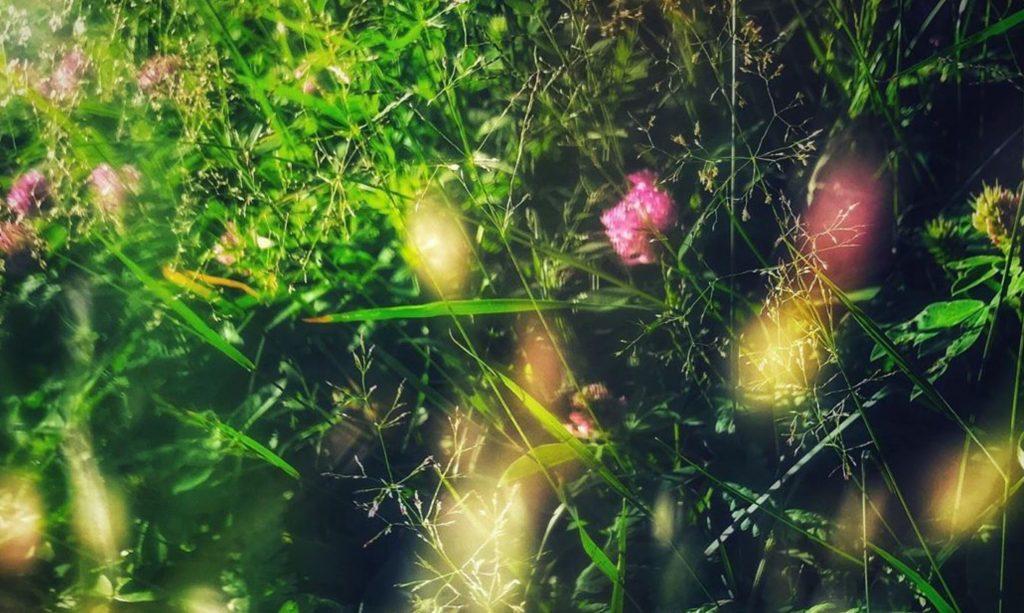 Bach-Blüten-Therapie führt sanft zum Erfolg